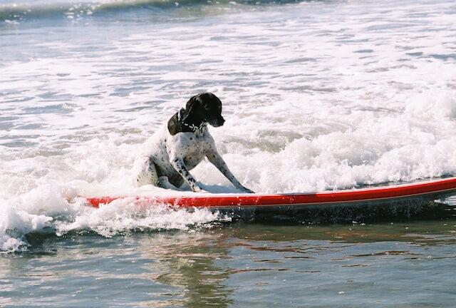 Coronado Bay Resort_San Diego_Surf per Cani