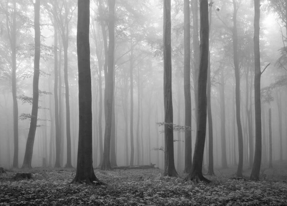 melancholy-forest