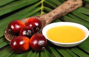olio di palma3