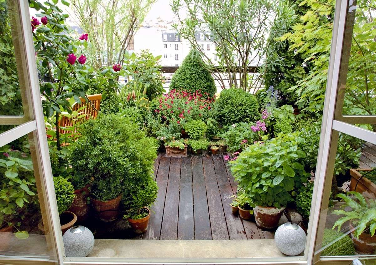 Piante da terrazzo balconi ever green tenditrendy - Idee per aiuole giardino ...