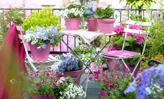 Piante da terrazzo: balconi ever green | TendiTrendy