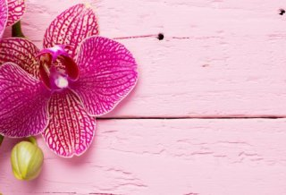 orchidea come curarla.jpg3