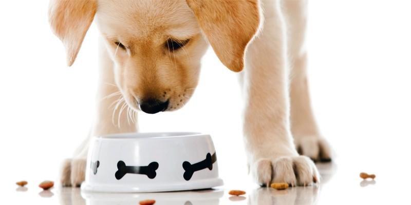 croccantini per cani