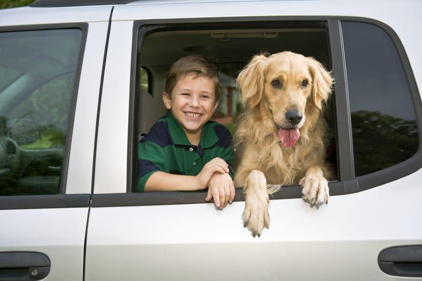 trasportino per cane